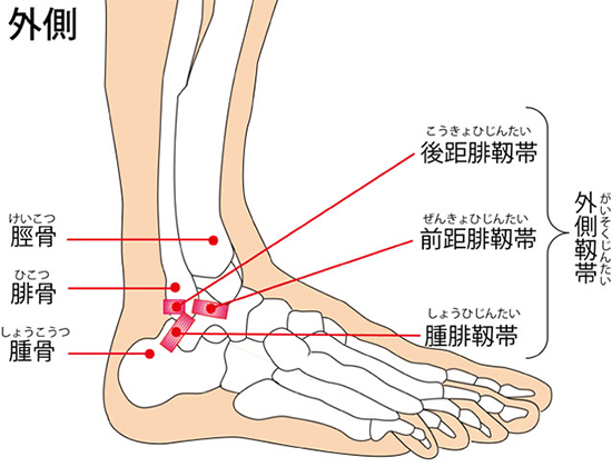 ankle-img1-2