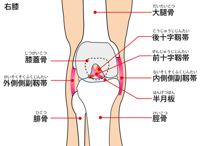 knee-img1